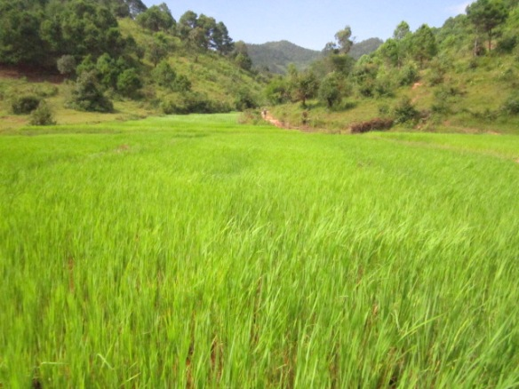 The next morning we left Kalaw and started our trek through the rice fields...
