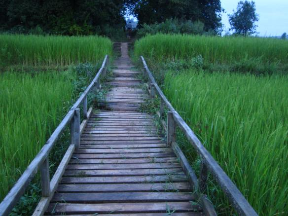Bridge and rice field to lead us to our destination for the night after a 22 kilometer trek.
