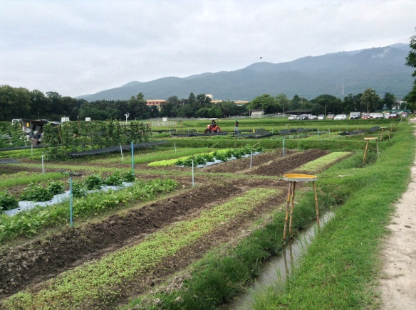 An organic farm - part of The Royal Project - right in the middle of the city.