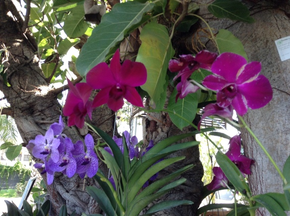 Just a bunch of gorgeous orchids hanging in a parking lot.