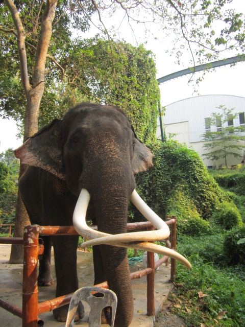 You can see elephants in many places