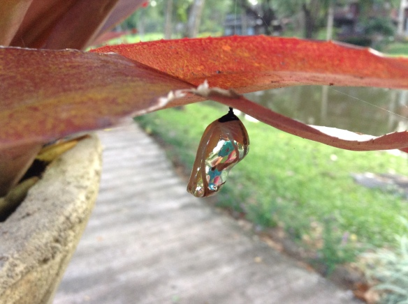 No question that nature is the best artist. Unbelievable chrysalis.