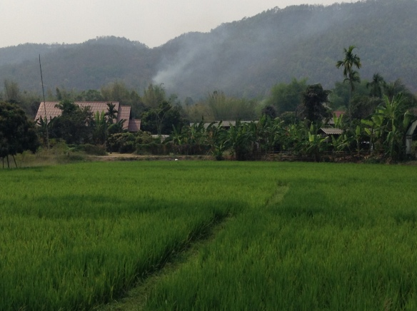 This is a common scene just outside of town - the rice fields and mountain are stunning...and then there's the smoke. Please stop burning.