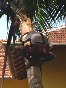 At breakfast we observed this guy doing some tree pruning