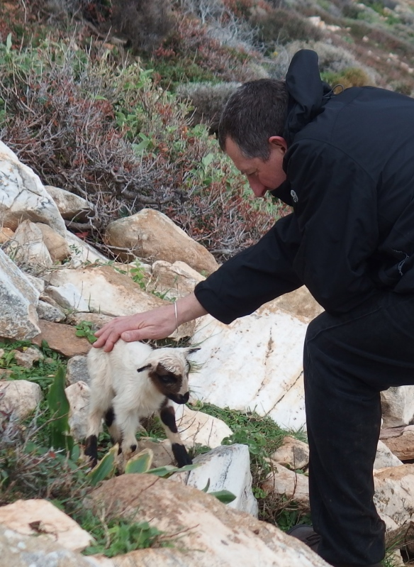 As we were nearly at the bottom of our descent we had a wonderful surprise - a baby goat, not even a kid yet.