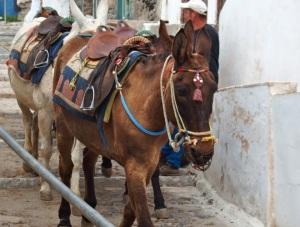 ...we rode donkeys