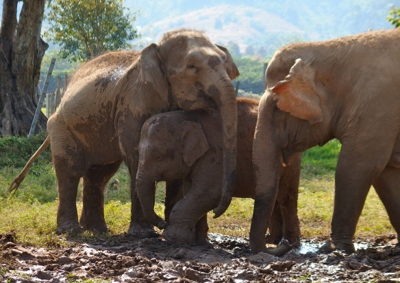 The elephants love each other.