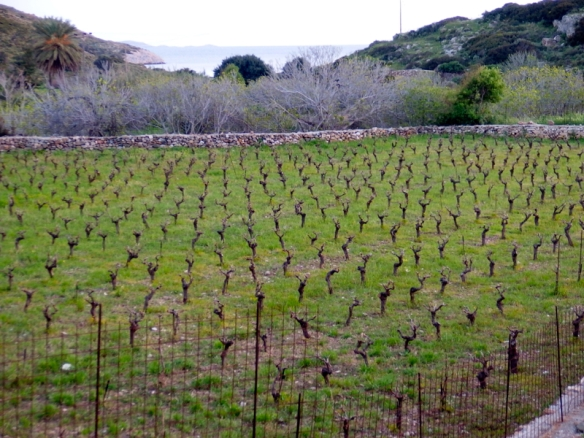 The island is full of small vineyards