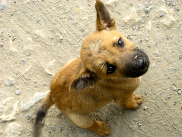 This little guy I met in Burma, was so cute and friendly, but he already had some mange on his head