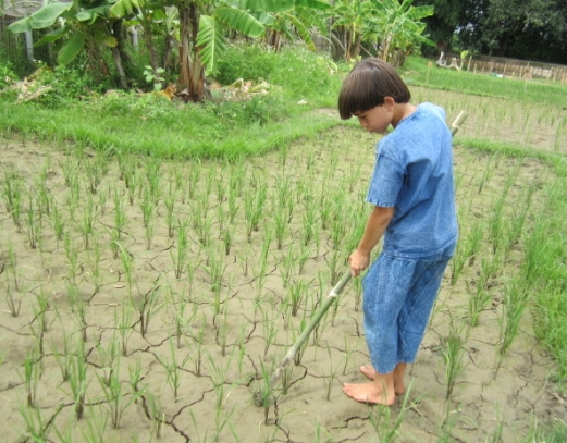 Students making a game out of weeding the rice