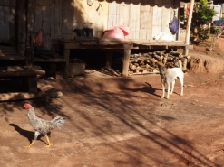 and the ubiquitous dogs and chickens