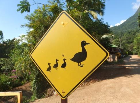 Ducking crossing